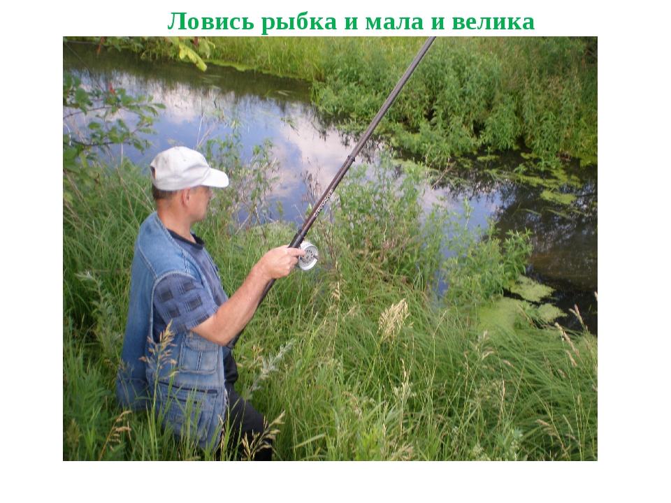 Ловись рыбка и мала и велика