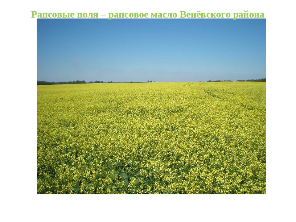 Рапсовые поля – рапсовое масло Венёвского района