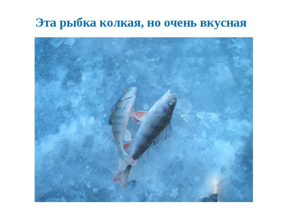 Эта рыбка колкая, но очень вкусная