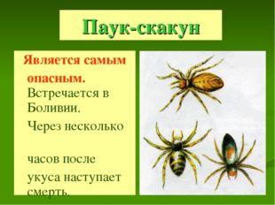 Паук-скакун Является самым опасным. Встречается в Боливии. Через несколько ча