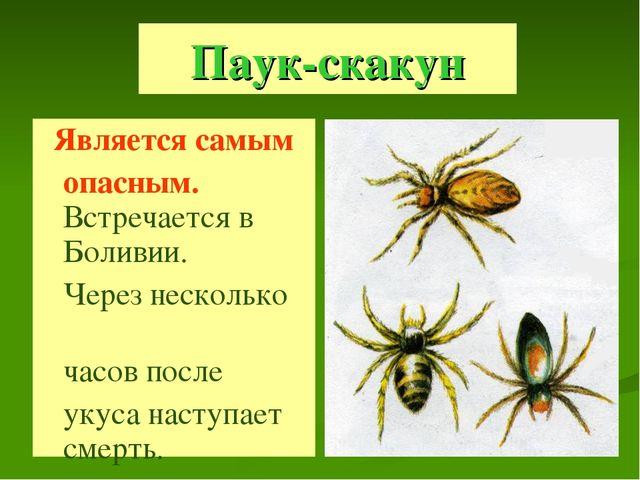 Паук-скакун Является самым опасным. Встречается в Боливии. Через несколько ча...