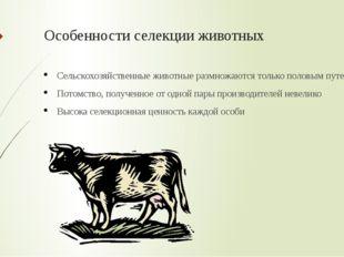 Особенности селекции животных Сельскохозяйственные животные размножаются толь
