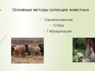 Основные методы селекции животных Одомашнивание Отбор Гибридизация