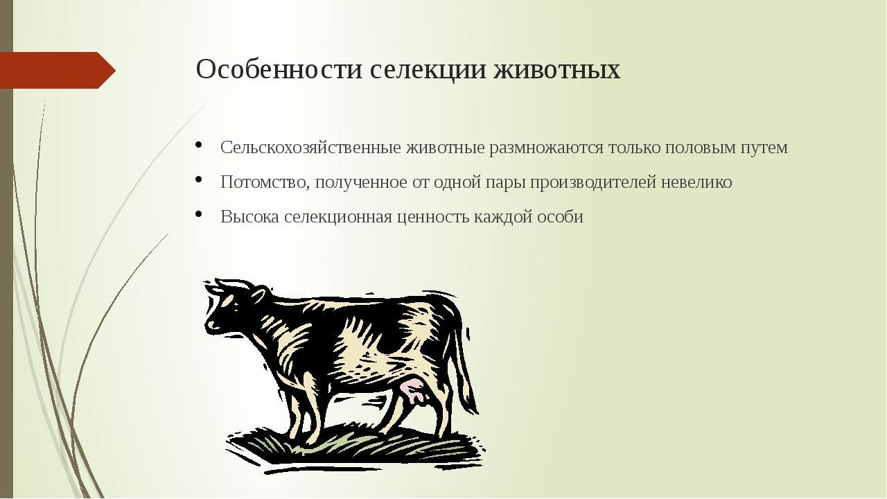 Особенности селекции животных Сельскохозяйственные животные размножаются толь...