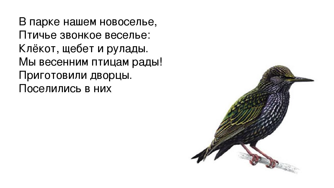 В парке нашем новоселье, Птичье звонкое веселье: Клёкот, щебет и рулады. Мы в...