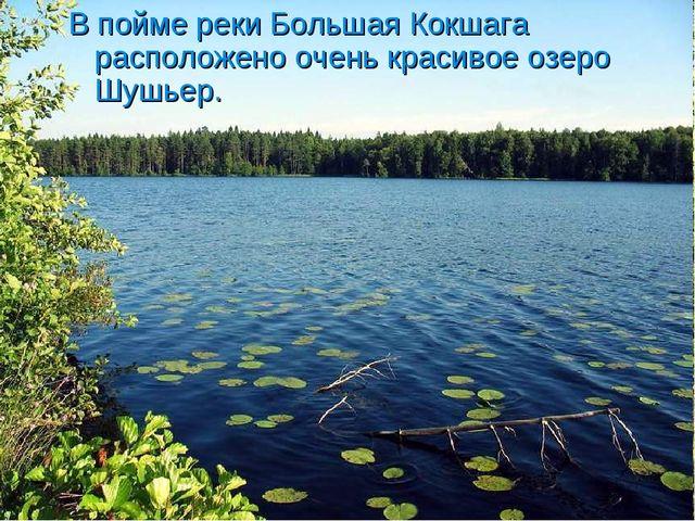 В пойме реки Большая Кокшага расположено очень красивое озеро Шушьер.