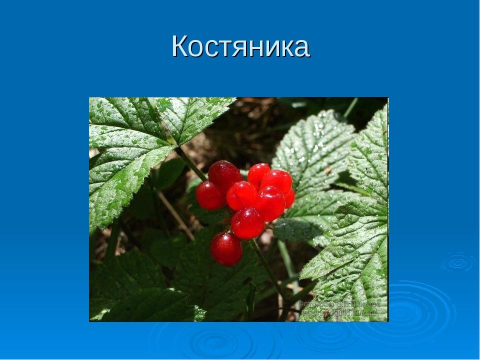 Костяника