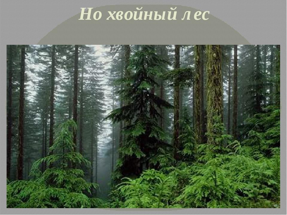 Но хвойный лес