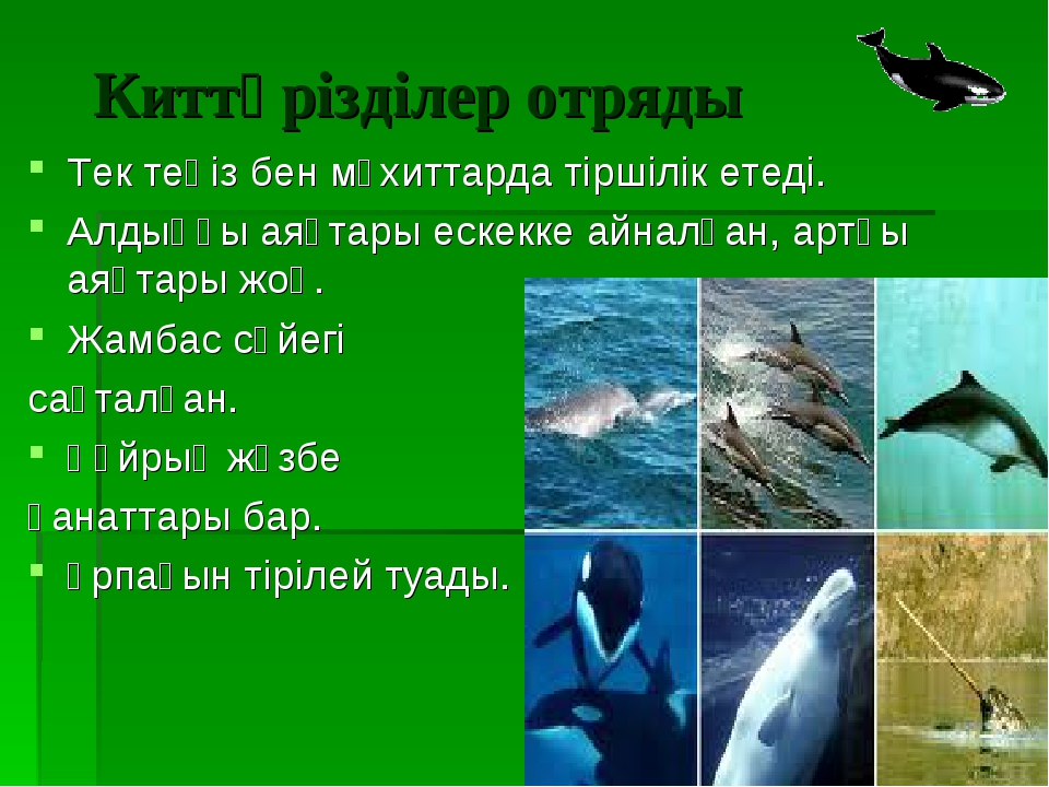Киттәрізділер отряды Тек теңіз бен мұхиттарда тіршілік етеді. Алдыңғы аяқтары...