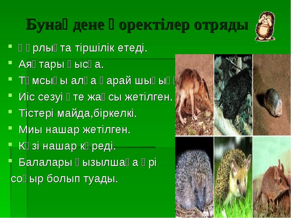 Бунақдене қоректілер отряды Құрлықта тіршілік етеді. Аяқтары қысқа. Тұмсығы а...