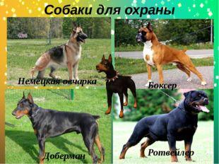 Собаки для охраны . Доберман Ротвейлер Немецкая овчарка Боксер