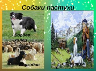 Собаки пастухи Волкодав Бордер колли Пастух