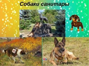 Собаки санитары Колли Овчарки