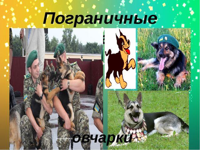 Пограничные собаки овчарки