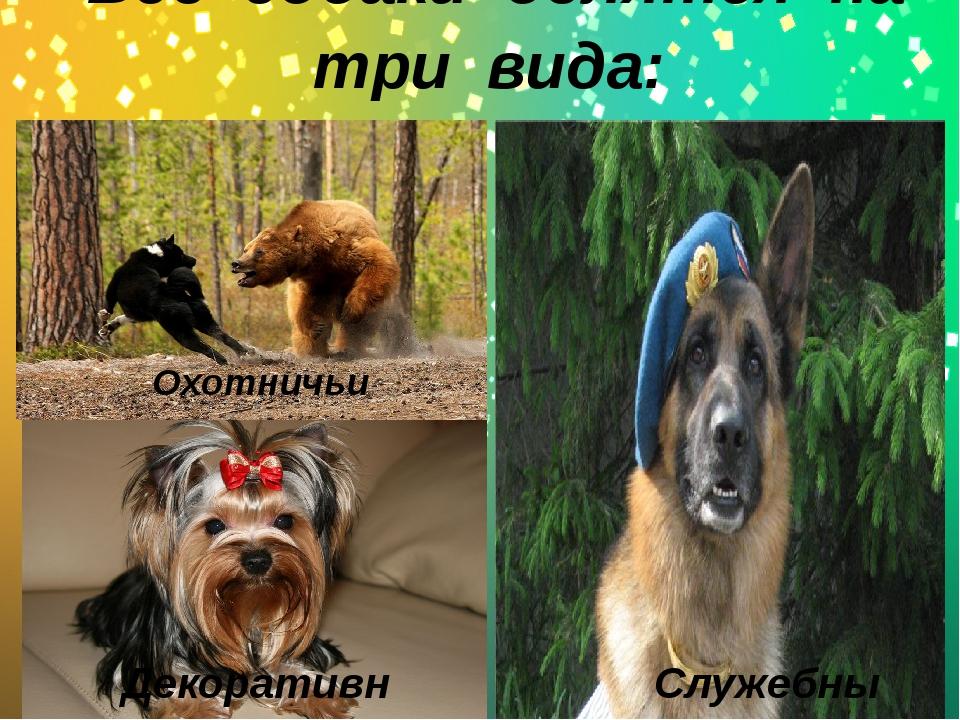 -Все собаки делятся на три вида: Охотничьи Cлужебные Декоративные Служеб...