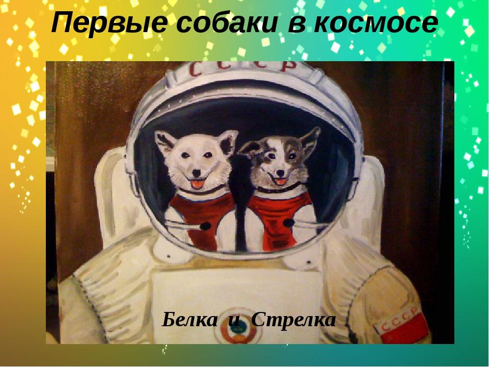 Первые собаки в космосе . Белка и Стрелка