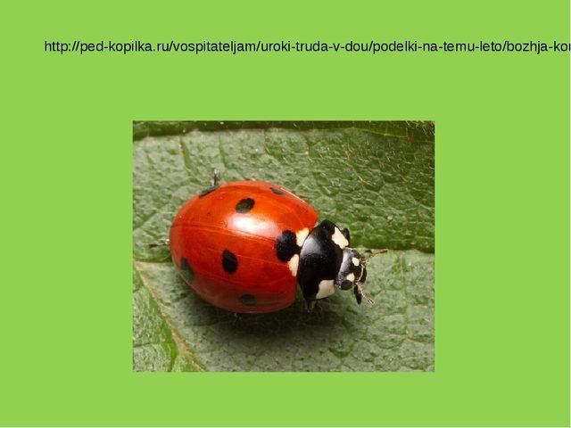 http://ped-kopilka.ru/vospitateljam/uroki-truda-v-dou/podelki-na-temu-leto/bo...