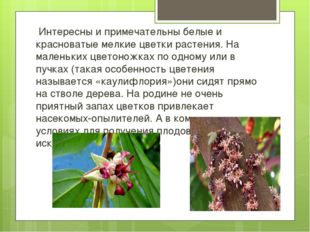 Интересны и примечательны белые и красноватые мелкие цветки растения. На мал
