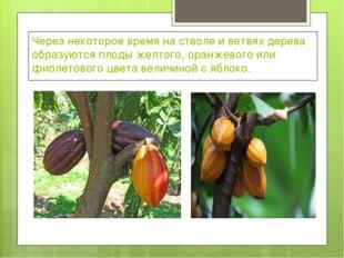 Через некоторое время на стволе и ветвях дерева образуются плоды желтого, ора