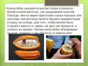 Какао-бобы находятся внутри плода и покрыты белой сочной мякотью, так называ