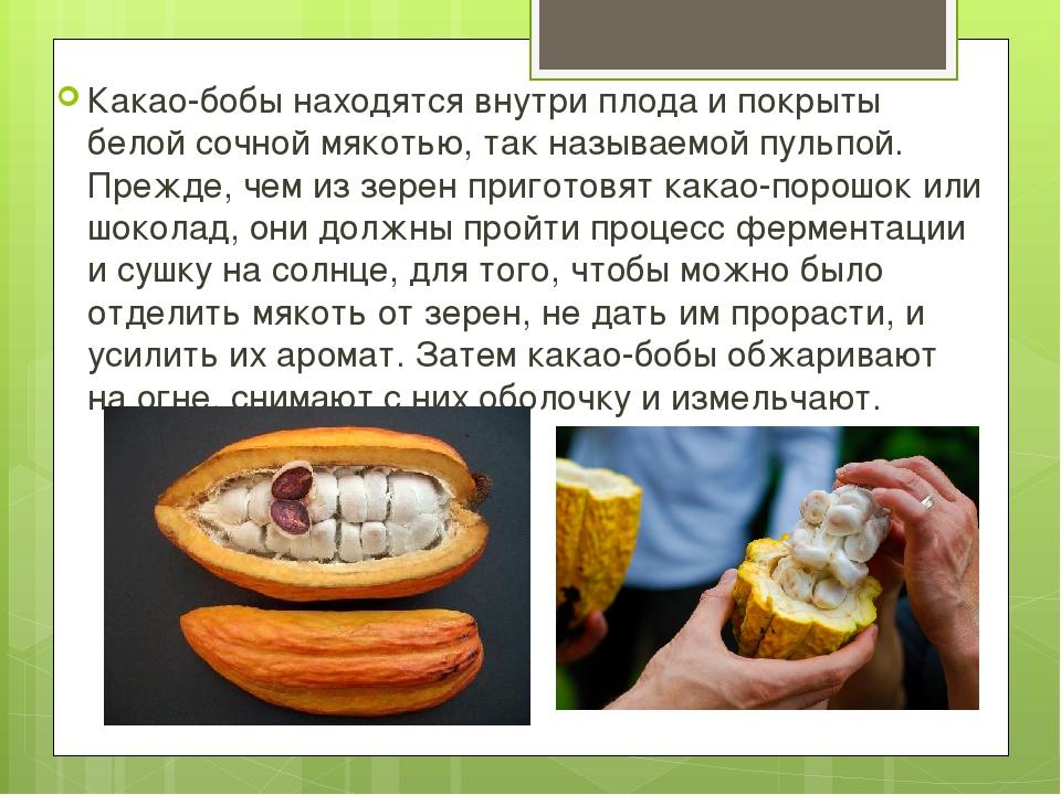 Какао-бобы находятся внутри плода и покрыты белой сочной мякотью, так называ...