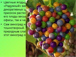 Цветные ягодыдиаметром около 3-4 миллиметров. «Радужный» виноград, как правил
