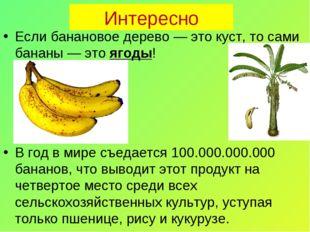 Интересно Если банановое дерево — это куст, то сами бананы — это ягоды! В год