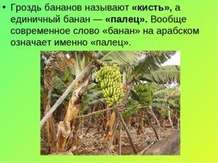 Гроздь бананов называют «кисть», а единичный банан — «палец». Вообще современ
