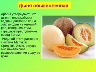 Дыня обыкновенная Арабы утверждают, что дыня – плод райских садов и доставил