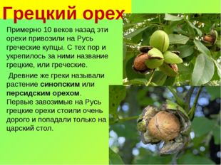 Грецкий орех Примерно 10 веков назад эти орехи привозили на Русь греческие ку