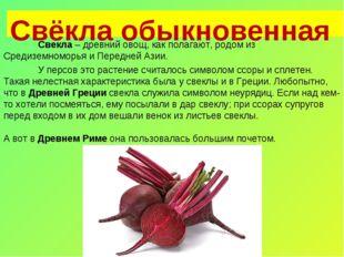 Свёкла обыкновенная Свекла – древний овощ, как полагают, родом из Средиземно