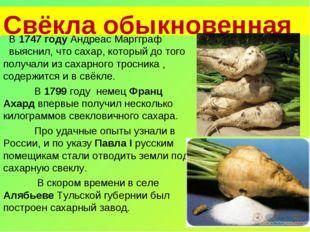 Свёкла обыкновенная В 1747 году Андреас Маргграф выяснил, что сахар, которы