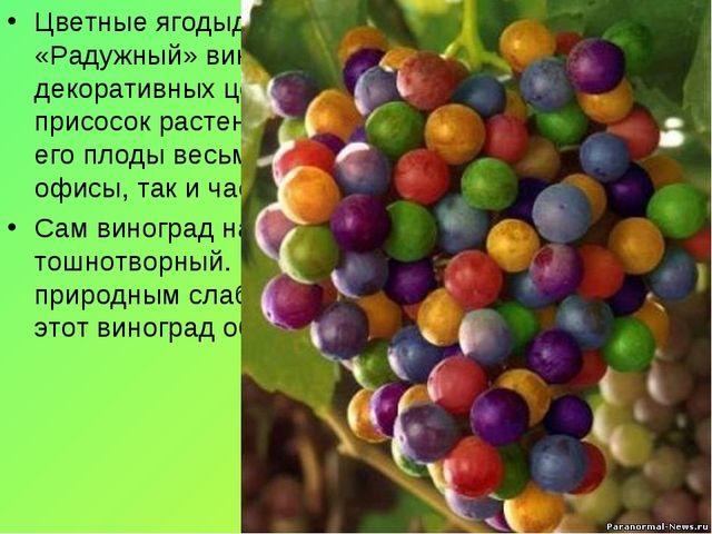 Цветные ягодыдиаметром около 3-4 миллиметров. «Радужный» виноград, как правил...