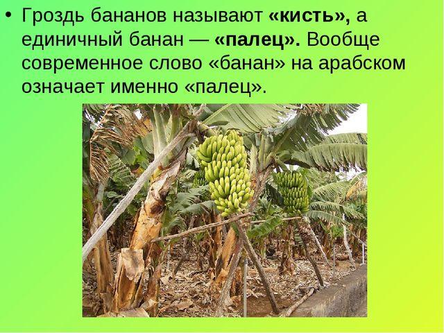 Гроздь бананов называют «кисть», а единичный банан — «палец». Вообще современ...
