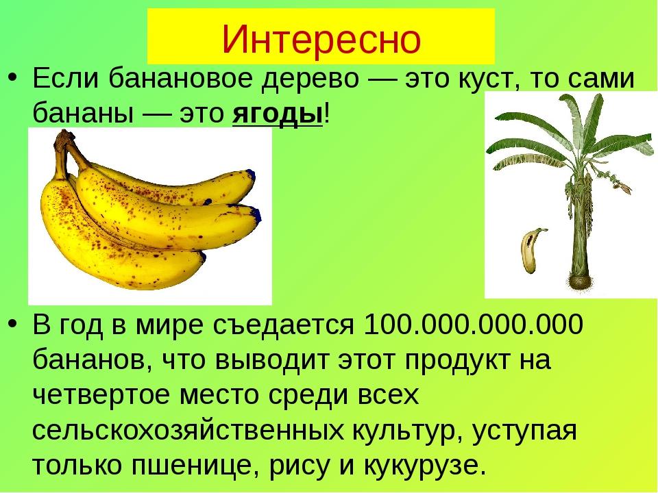 Интересно Если банановое дерево — это куст, то сами бананы — это ягоды! В год...