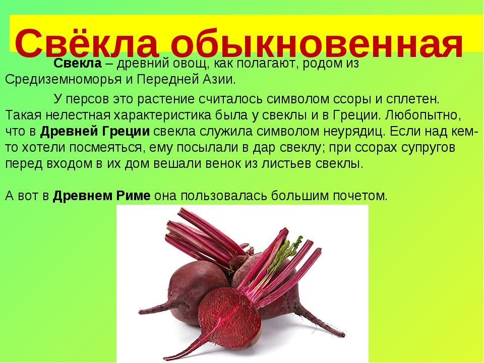 Свёкла обыкновенная Свекла – древний овощ, как полагают, родом из Средиземно...