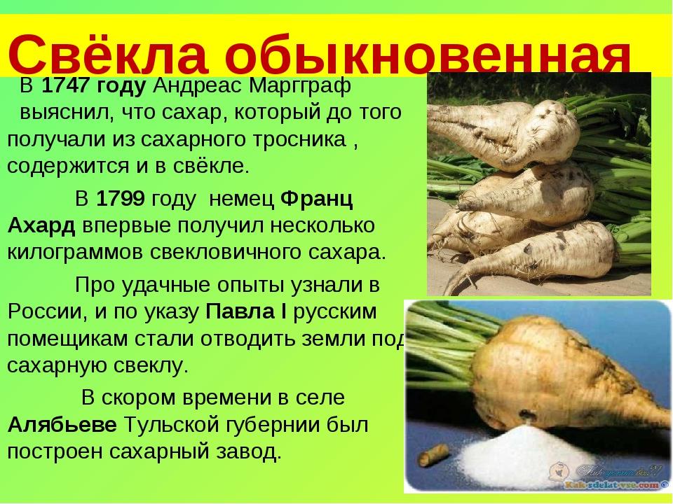 Свёкла обыкновенная В 1747 году Андреас Маргграф выяснил, что сахар, которы...