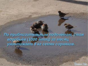 По приблизительным подсчётам, стая воробьёв (1000 птиц) за месяц уничтожает 8