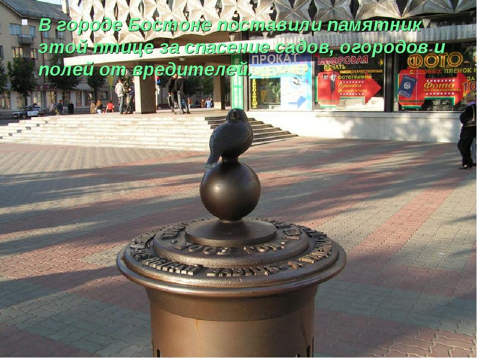 В городе Бостоне поставили памятник этой птице за спасение садов, огородов и...