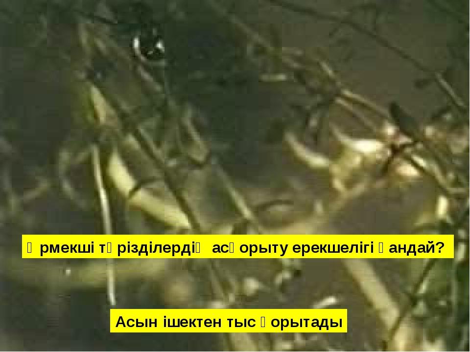 Өрмекші тәрізділердің асқорыту ерекшелігі қандай? Асын ішектен тыс қорытады