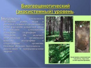 Биогеоценоз — совокупность организмов разных видов и различной сложности орга