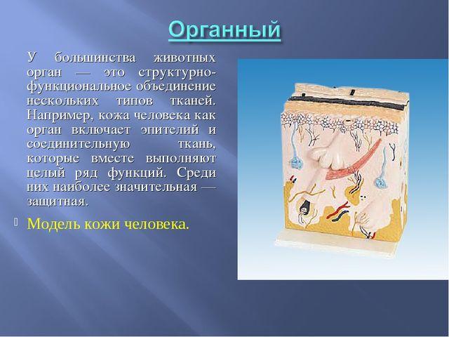 У большинства животных орган — это структурно-функциональное объединение нес...