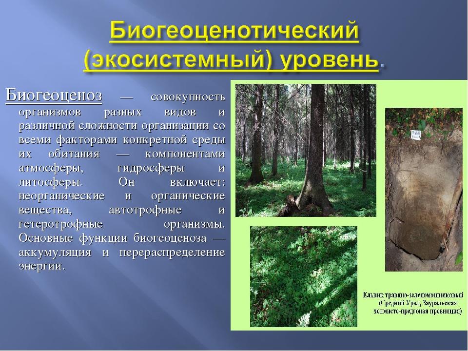 Биогеоценоз — совокупность организмов разных видов и различной сложности орга...