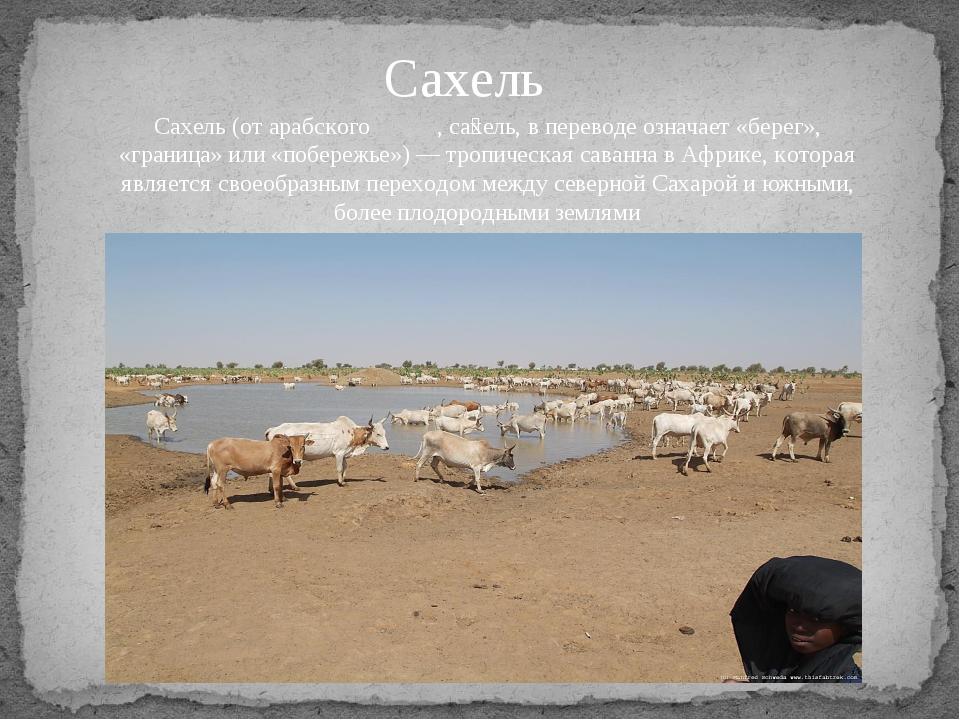 Сахель Сахель (от aрабского ساحل, са́хель, в переводе означает «берег», «гран...