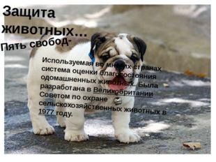 Защита животных… Пять свобод- Используемая во многих странах система оценки б
