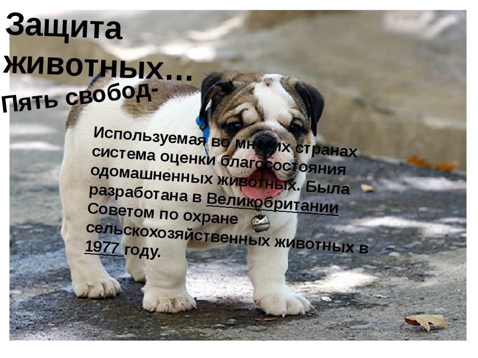 Защита животных… Пять свобод- Используемая во многих странах система оценки б...