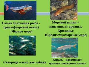 Самая болтливая рыба - тригла(морской петух) (Чёрное море) Ставрида –лает, ка