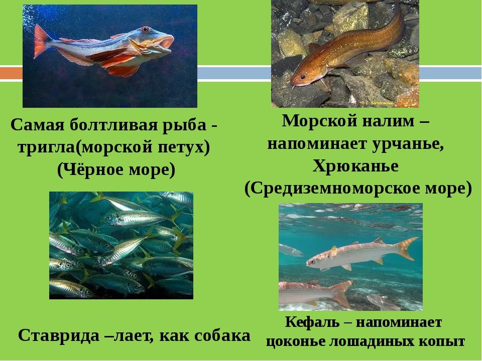 знаком как рыбы со общаться