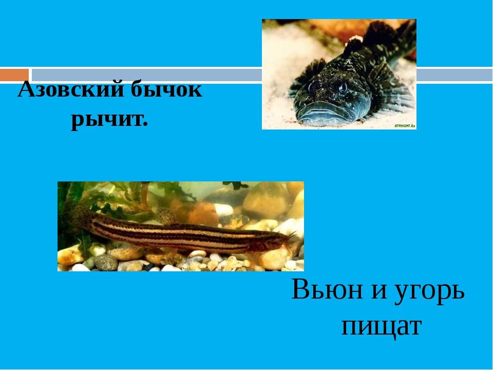Вьюн и угорь пищат Азовский бычок рычит.