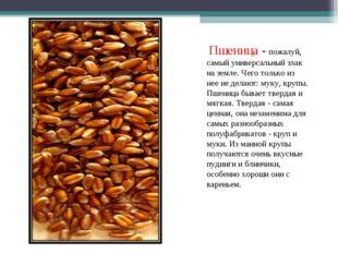 Пшеница - пожалуй, самый универсальный злак на земле. Чего только из нее не